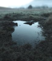Winter Swamp 4 by GoblinStock