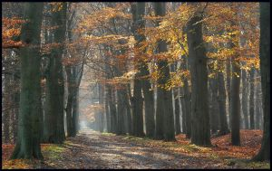 Looking for late Nov's beauty by jchanders