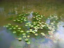 lily pads by grizzy898