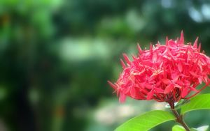 Red Flower Laterally Inverted by bogas04