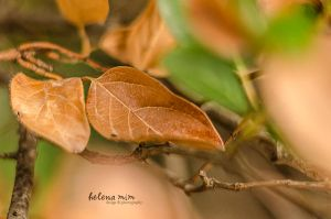 Colors of Autumn by HelenaMim
