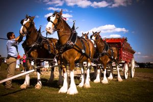 Driver, hitch the horses by boborchard