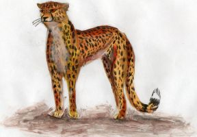 Cheetah by Lapapolnoch