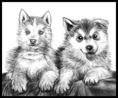 Puppies by Amarevia