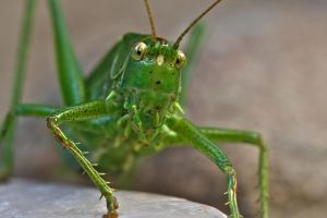 Jiminy Cricket by organicvision