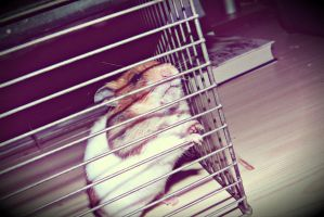 hamster by Pauline-graphics