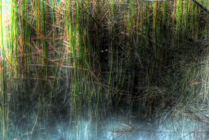 Water Grass by rhys954