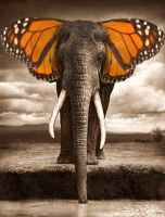 Elephantbutterfly by thesso