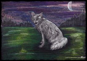 White White Fox Woof by Ludifico