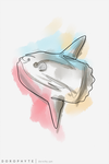 Single Line Sunfish by Dorophyte