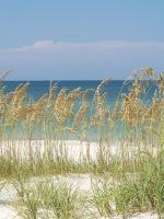Cape San Blas Sea Oats by wulfdragyn