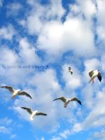 .migrate by envy4life