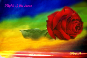 flight of the rose by starlight2infinity