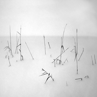 Winter Grasses by intao