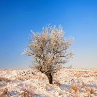 Frosty Tree by Andyw01