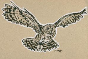 Owl by M-Everham