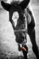 carrot drop in black and white by Rohwen