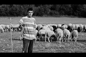 Young and educated shepherd by mario19