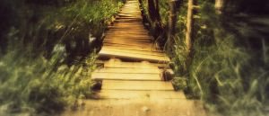 Bridge by L-JustinePhotography