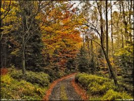 Autumn Forest by PaSt1978