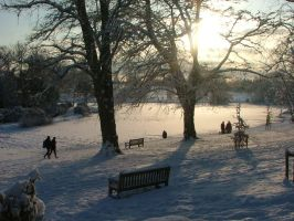 The Park in the Winter by countevil