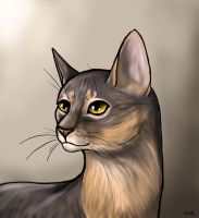 Abyssinian Cat by Scink