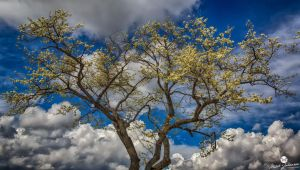 Spring Blossoms HDR by mjohanson