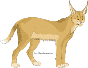 Caracal Adopt / 4 points // TAKEN by Leopardenschweif
