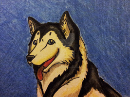 Malamute ACEO Badge *FOR SALE* by OllyChimera