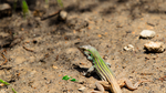 Wait Mr. Whiptail by Tyrannax