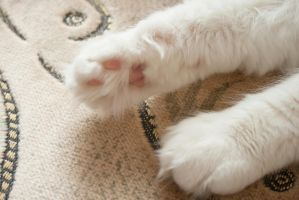 Cute Cat Paws by Meffisto29