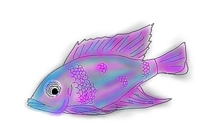 Peacock Cichlid Fish by Storm-Cwalker