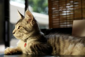 Profile of a Cat by JQ444