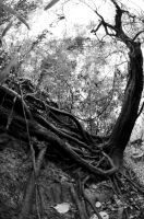Leaning Tree With Roots by lamorth-the-seeker