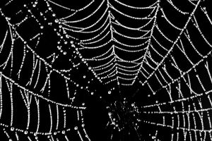 dewy web by TlCphotography730