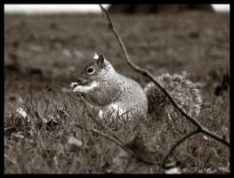 Squirrel Sit by Dreamk8