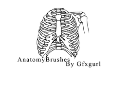 Anatomy Brushes . by gfxgurl