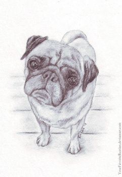 1268 Pug by YourFavoriteRussian