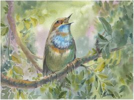 Bluethroat by kosharik69