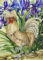 Buff Laced Polish Chicken by HouseofChabrier