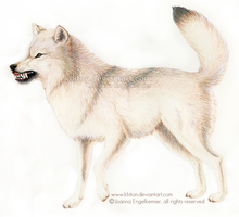 Wolf Displaying Aggression by khiton