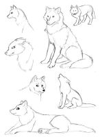 A Few Wolf Sketches by HowManyDragons