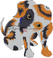 Target (Calico Puppy Adopt--closed) by RachBurns