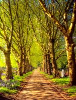 STOCK:Tree lined Path:STOCK by 4420