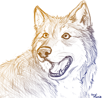 Lobo by GralMaka