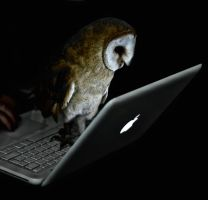 My pet owl always wants to play with any computer by VXLPhotography