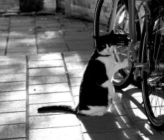 Cat and bike by Darkedraveness