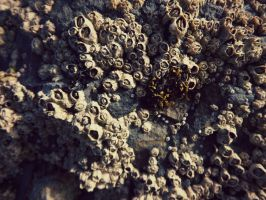 hundreds of little barnacle's by ARAart