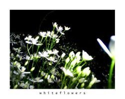 White Flowers by Bloody-Lover