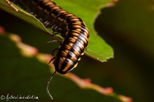 Millipede - Yaaaaay by fiathriel
